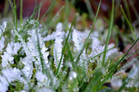 Frost sparkling on the grass
