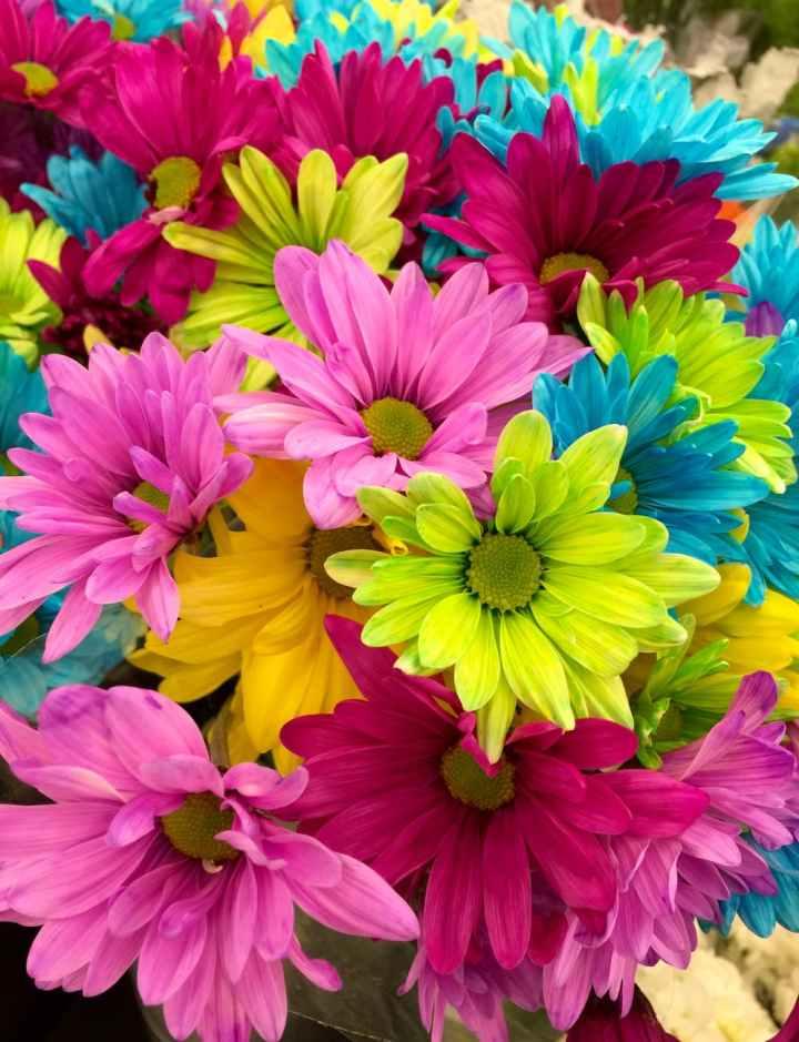 flowers colorful bloom daisies
