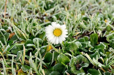 winter_hoarfrost_on_a_flower_201664
